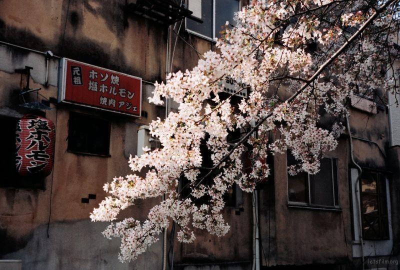 摄于2014年4月,日本京都,高濑川旁