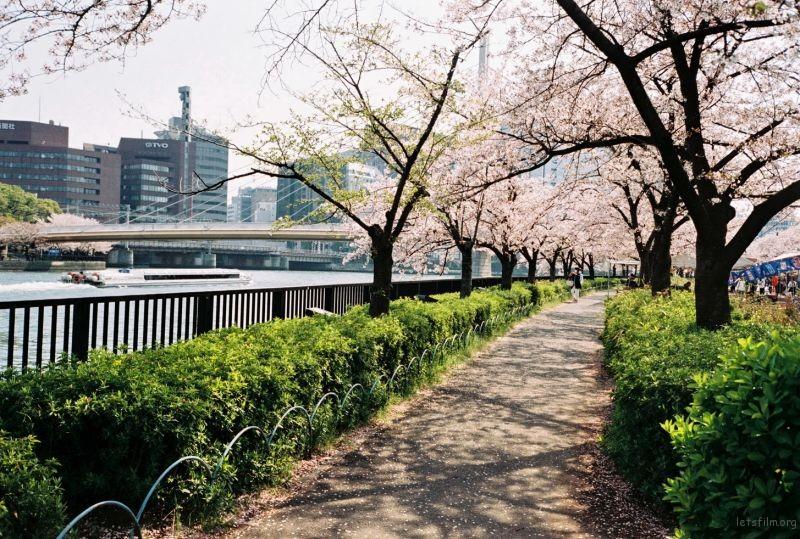 摄于2014年4月,日本大阪