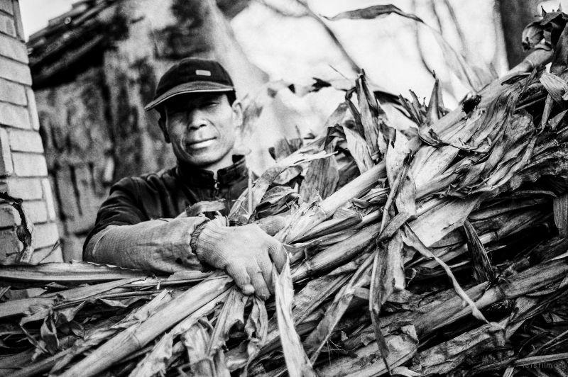 这是我的爸爸,他正要给牛切草,我拦住给照了这张照片。