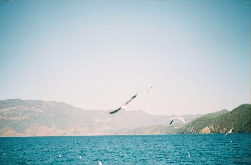 《孤鸟的歌》