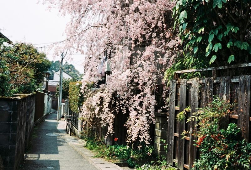 摄于2014年4月,日本京都,哲学小道