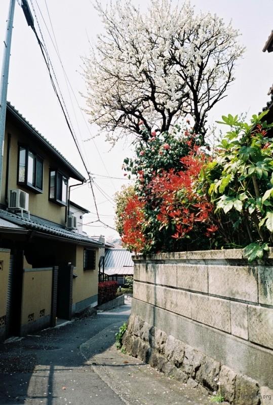 摄于2014年4月,日本京都