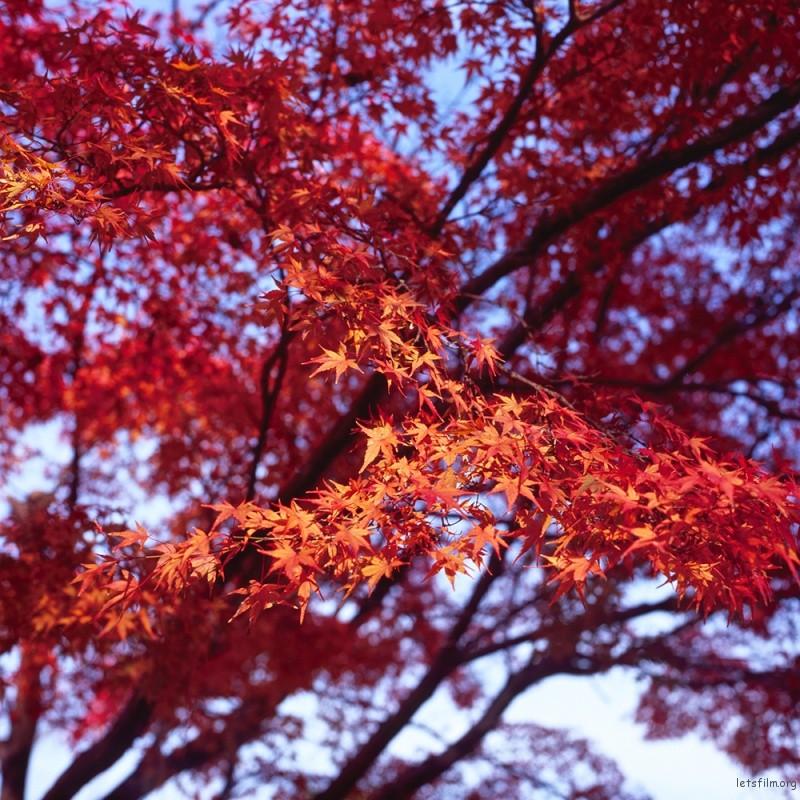京都 嵐山  HASSELBLAD 500C/M ZEISS PLANAR T* 80/2.8 FUJIFILM RVP100