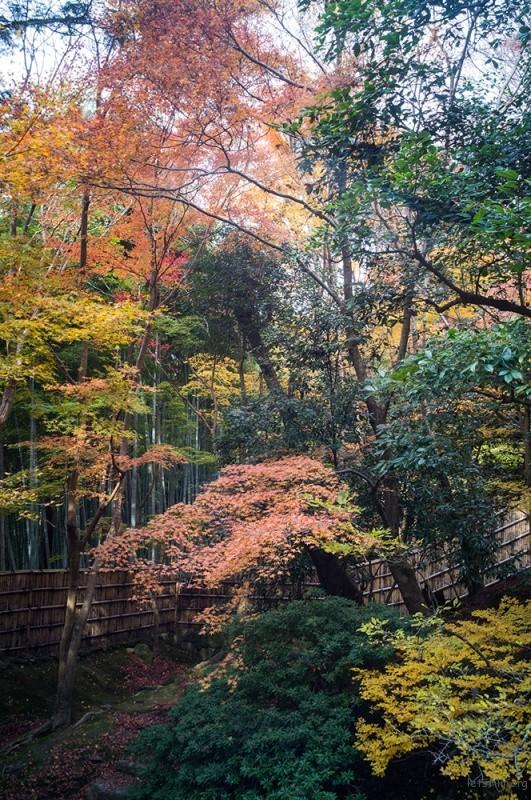 京都 銀閣寺  RICOH GXR MOUNT A12 LEICA SUPER-ANGULON 21/4
