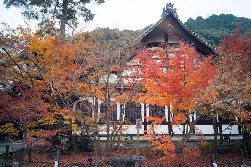 京都 永観堂  RICOH GXR MOUNT A12 LEICA SUPER-ANGULON 21/4
