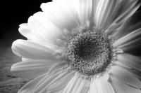 从一朵花开始