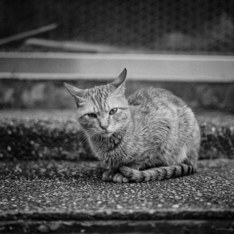 猫的世界02,Hasseblad 503+HP5(过期)