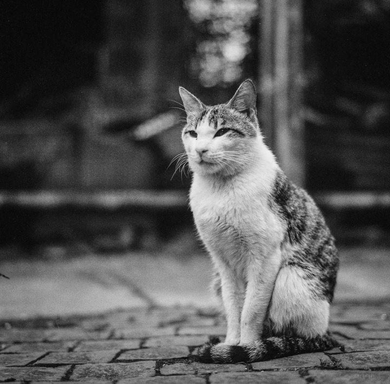 猫的世界03,Hasseblad 503+HP5(过期)