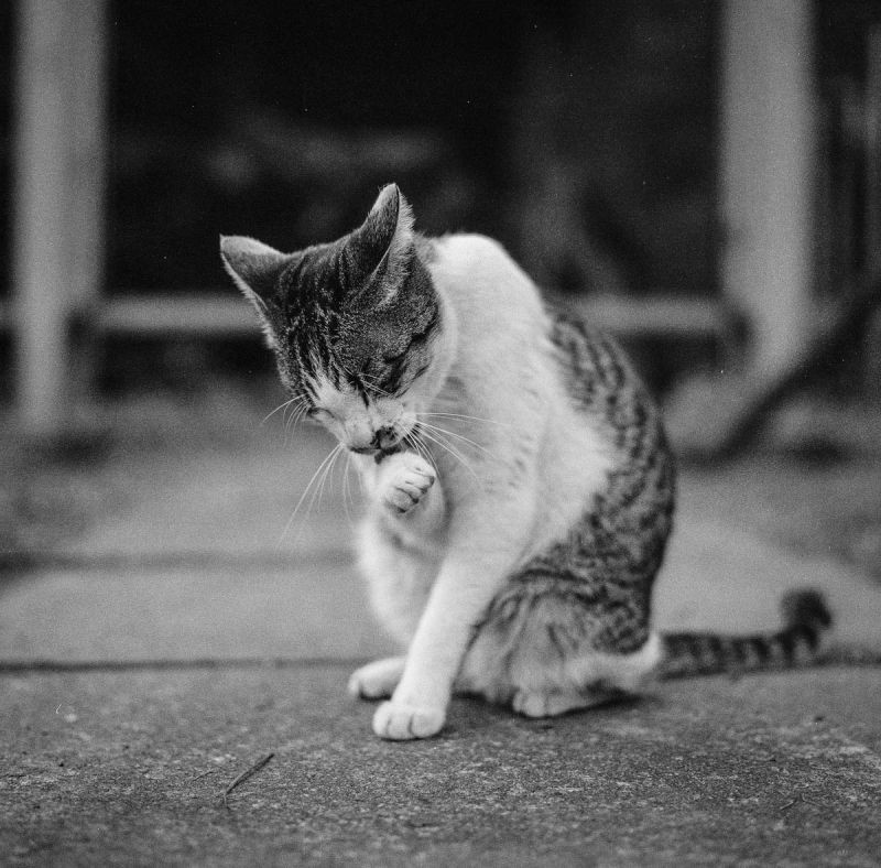 猫的世界04,Hasseblad 503+HP5(过期)