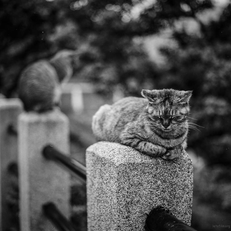 猫的世界05,Hasseblad 503+100ACROS(过期)