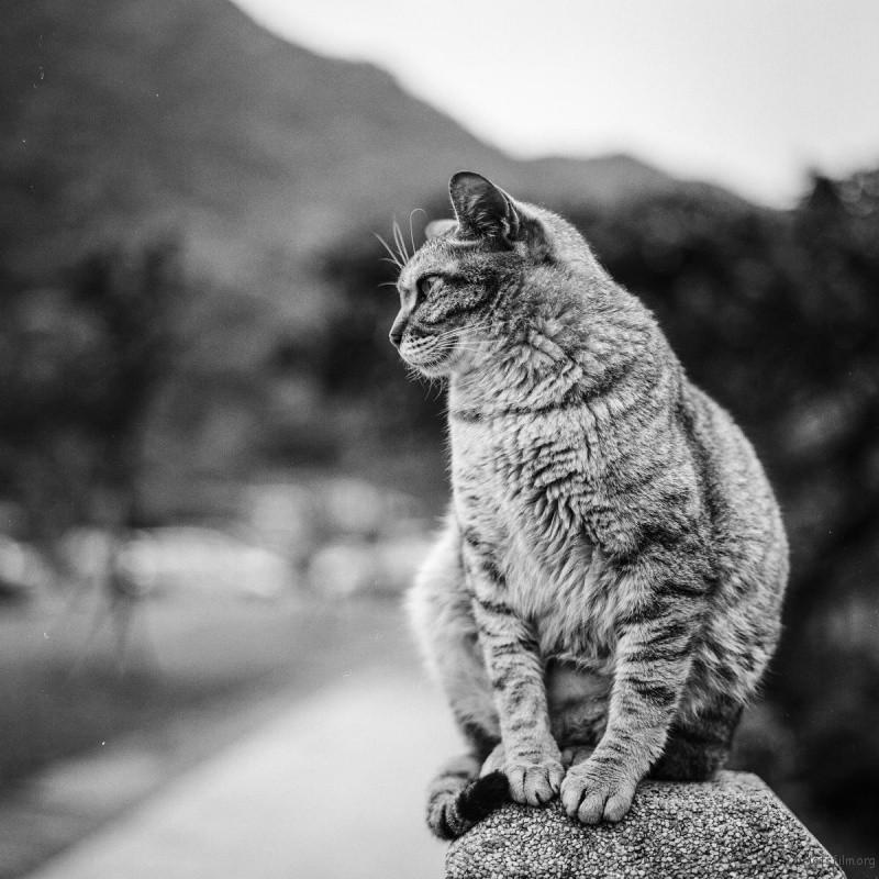 猫的世界06,Hasseblad 503+100ACROS(过期)