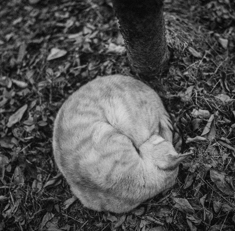 猫的世界13,Hasseblad 503+HP5(过期)