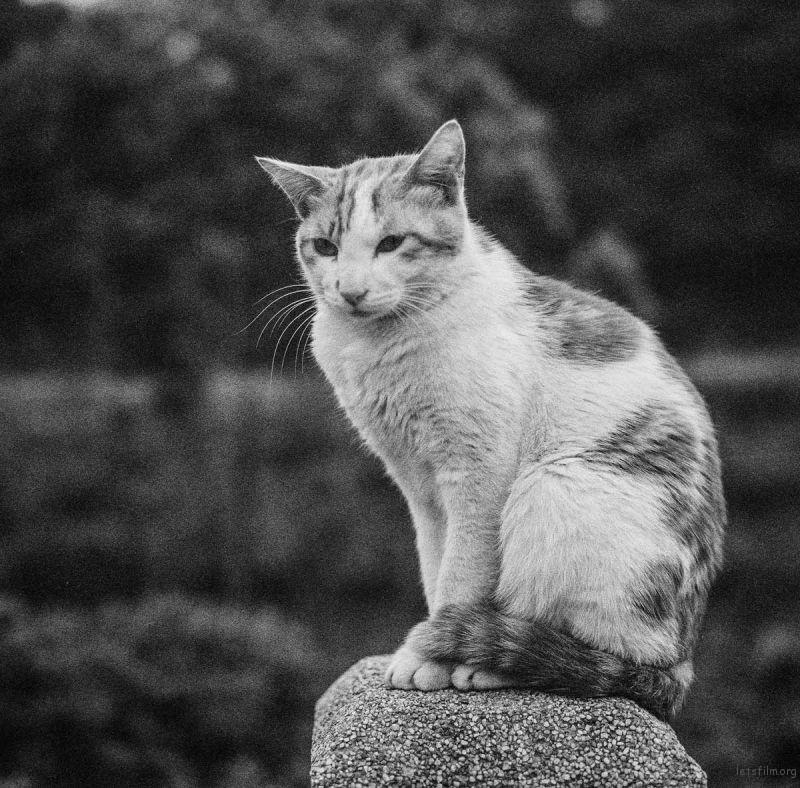 猫的世界14,Hasseblad 503+HP5(过期)