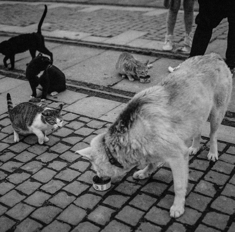 猫的世界18,Hasseblad 503+HP5(过期)