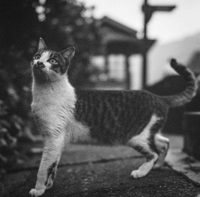 猫的世界01,Hasseblad 503+400TX
