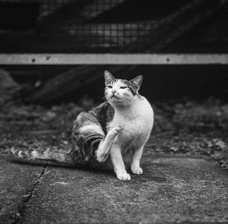 猫的世界15,Hasseblad 503+400TX