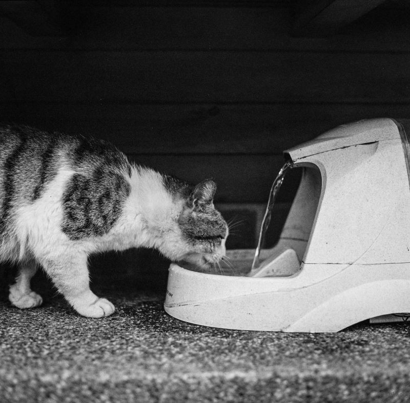猫的世界16,Hasseblad 503+400TX