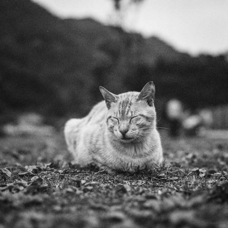 猫的世界17,Hasseblad 503+400TX