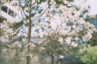 【生活在别处】No.33 京城