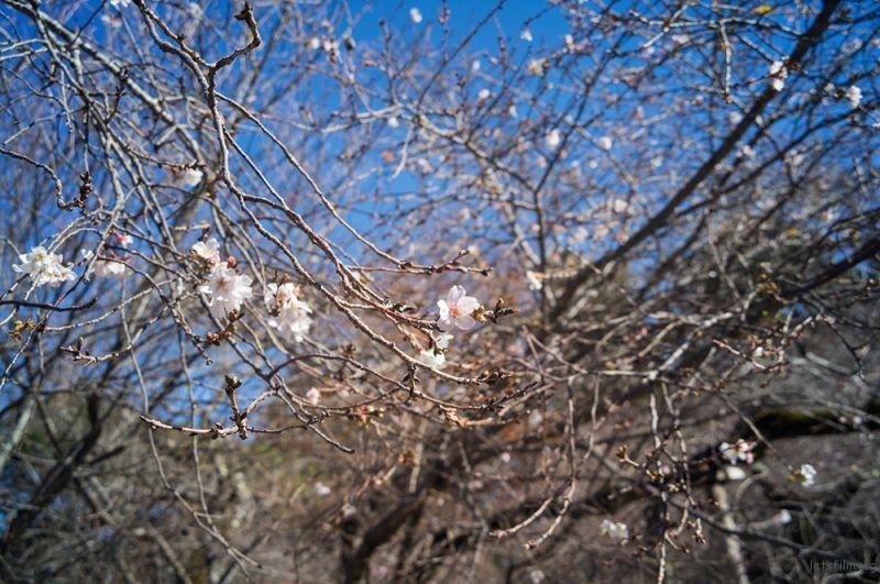彦根 彦根城外  RICOH GXR MOUNT A12 LEICA SUPER-ANGULON 21/4