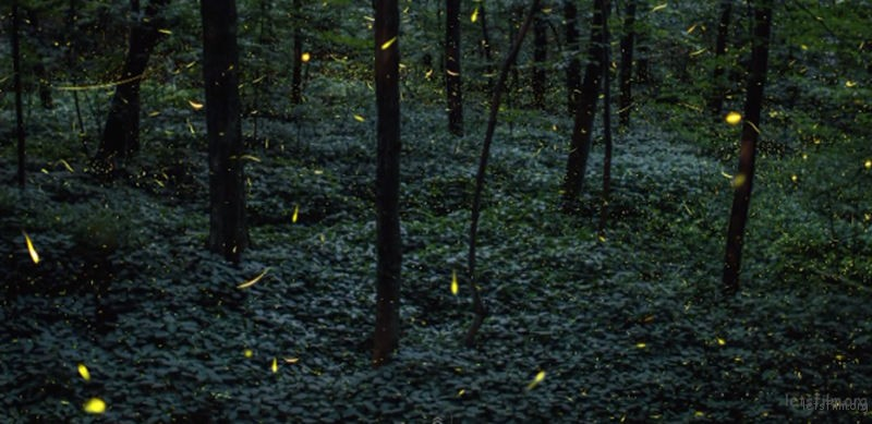 Timelapse-Scenes-of-Swarming-Fireflies-1-640x311