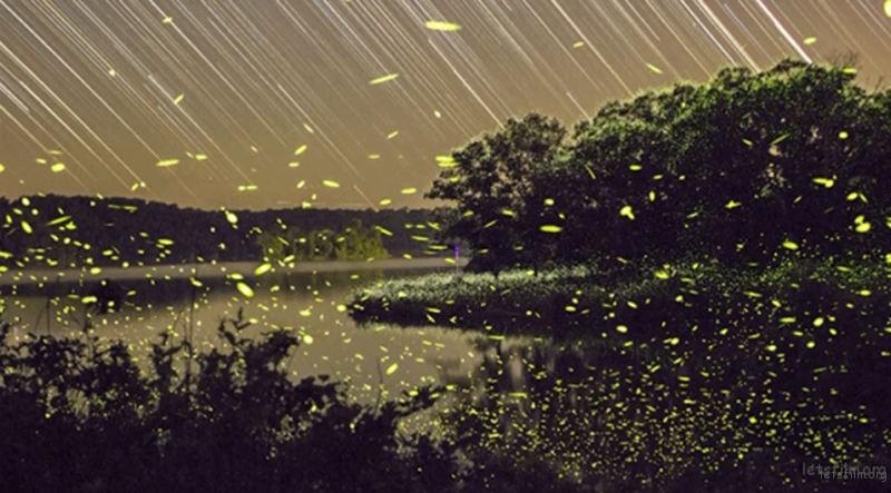 Timelapse-Scenes-of-Swarming-Fireflies-2-640x354