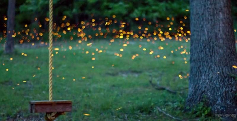 Timelapse-Scenes-of-Swarming-Fireflies-5-640x328