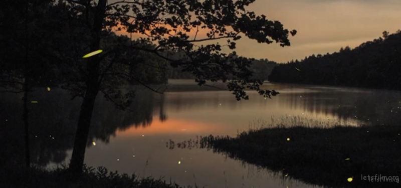 Timelapse-Scenes-of-Swarming-Fireflies-6-640x300