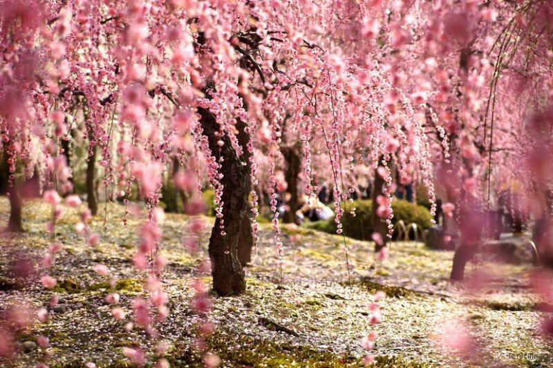 京都 by Nobuhiro Suhara