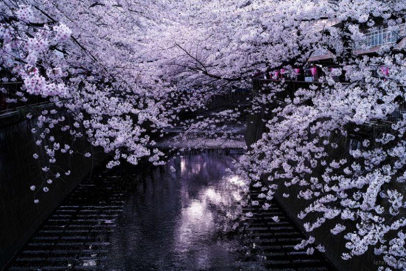 东京 by Noisy Paradise