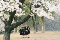 花見熊本. 2014春