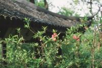 【生活在别处】No.80 往忆杭州