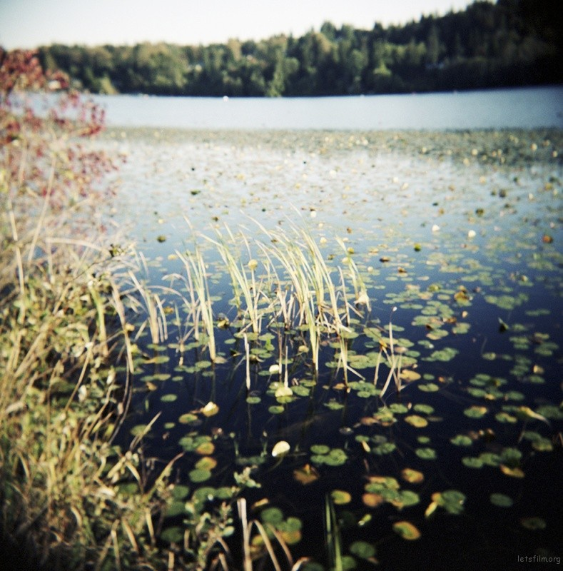 鹿湖(deer lake)藏身在本拿比市(city of Burnaby)。初秋时分的湖泊尚有睡莲的影子,沿着绕湖的桟道走上一圈,层叠的树叶在季节里变换着色彩。