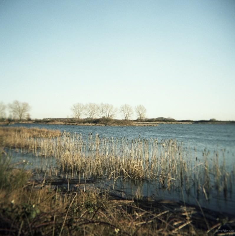 冬日里的iona beach是寒冷的。雪雁已经飞走,海鸥还在,湿地里剩下芦苇的残枝。