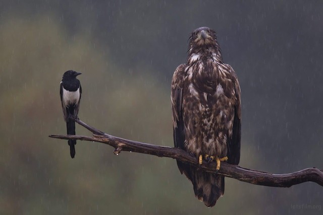 鸟类第三名,恶劣天气,Bernd Lamm
