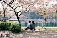 日本賞櫻之旅