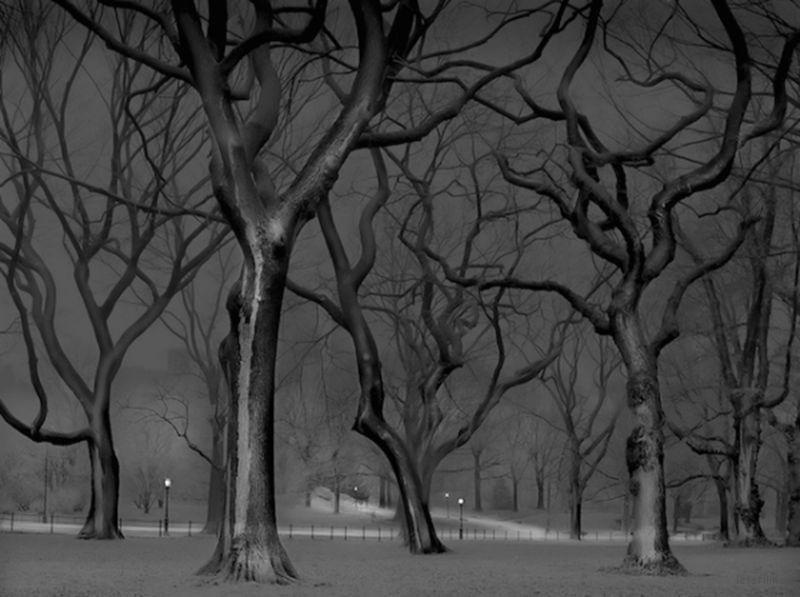 Michael-Massaia-Central-Park-at-Night-5-600x448