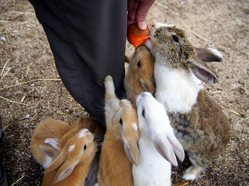 cute-bunnies-rabbit-island-okunoshima-11__880