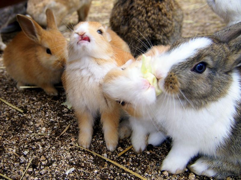 cute-bunnies-rabbit-island-okunoshima-1__880