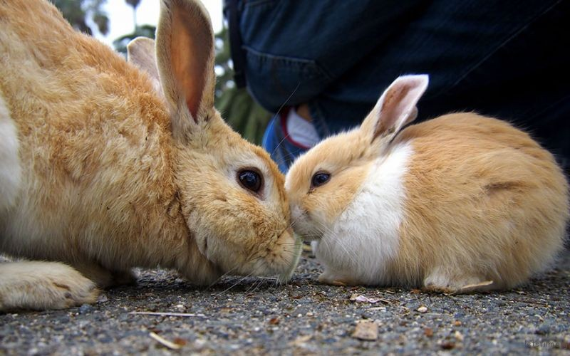cute-bunnies-rabbit-island-okunoshima-2__880