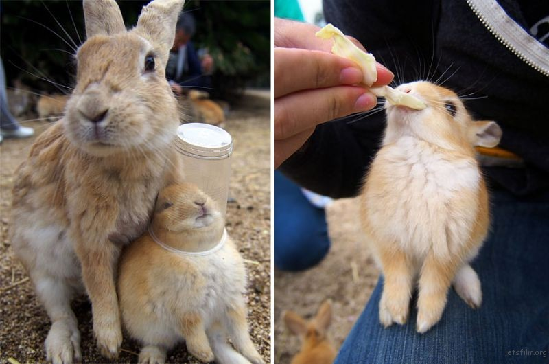 cute-bunnies-rabbit-island-okunoshima-4__880