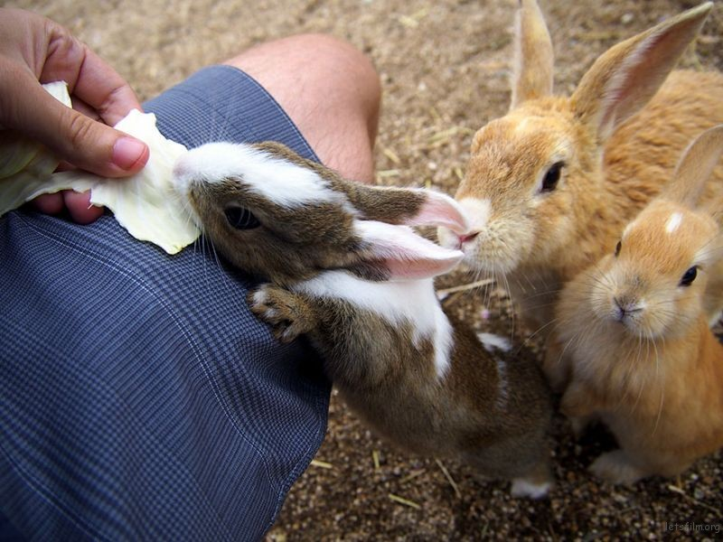 cute-bunnies-rabbit-island-okunoshima-5__880