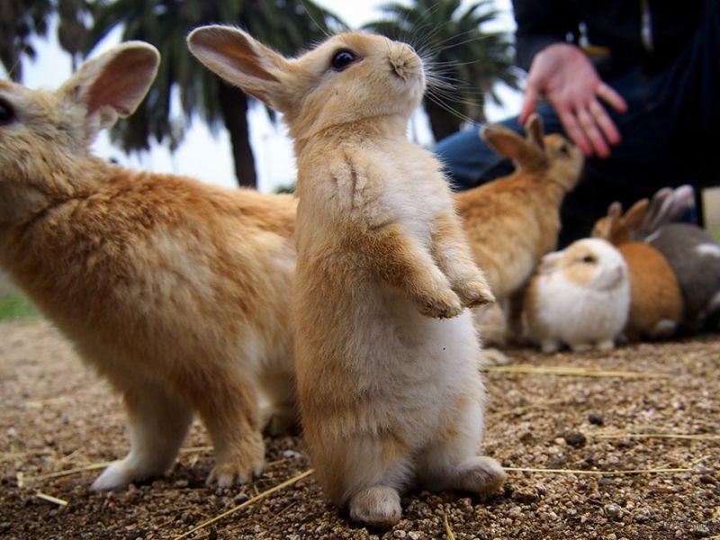 cute-bunnies-rabbit-island-okunoshima-7__880