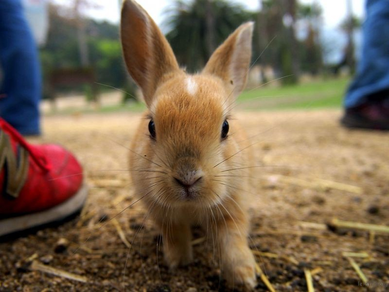 cute-bunnies-rabbit-island-okunoshima-9__880