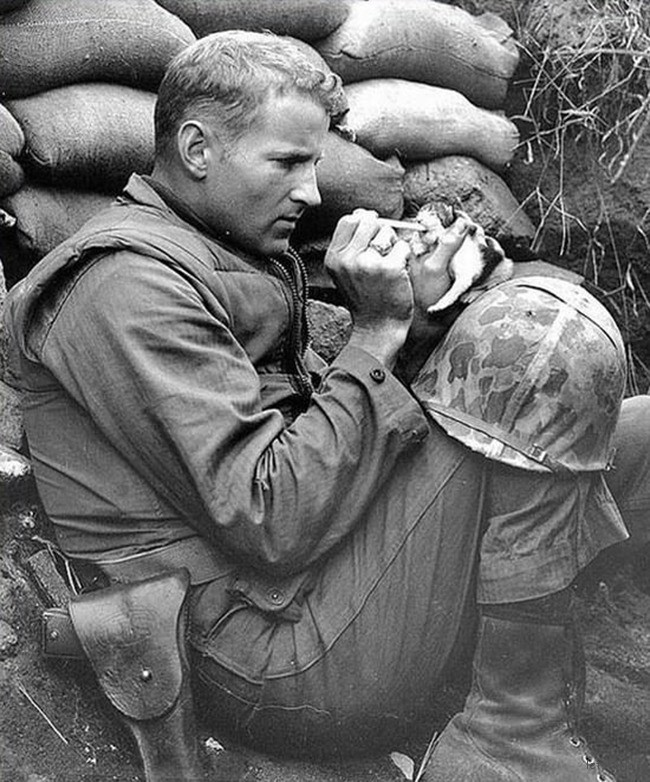 3. 1952 年韩战期间,一位士兵在战场上照料小猫