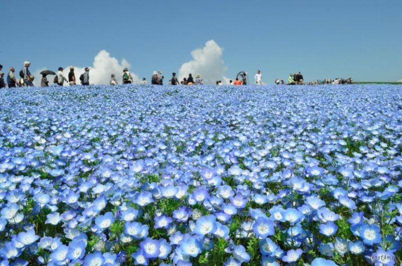 blue-flower-830x551
