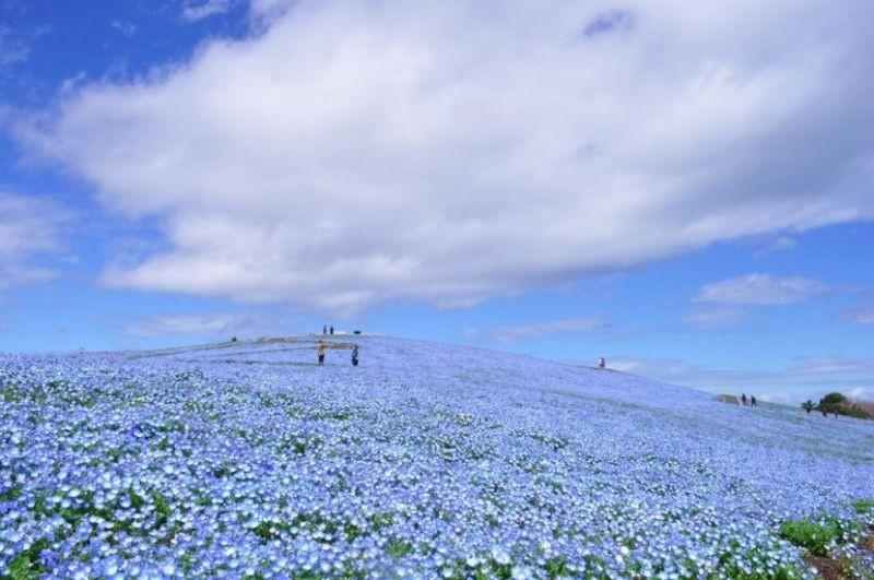 blue-flower1-830x551