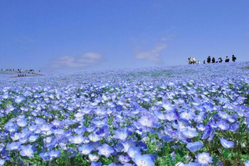 blue-flower3-830x555