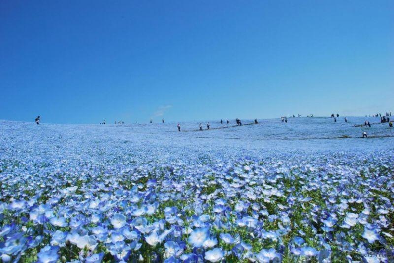 blue-flower4-830x555