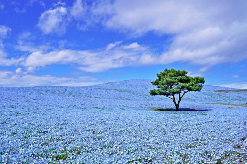 blue-flower5-830x551